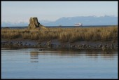 nanaimo-river-estuary04